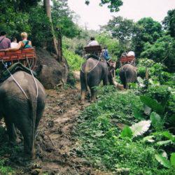 elephant travels